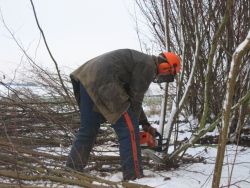Cutting hazel in January 2010
