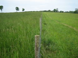 Two grass fields - on the left with nitrogen and on the right, without