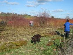 Wassledine willow wassail